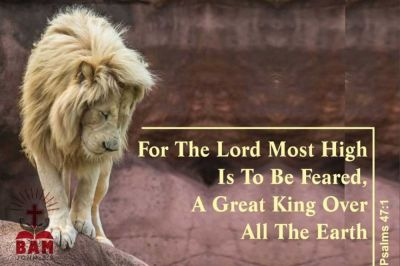 THE LION OF THE TRIBE OF JUDAH!!!